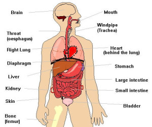 Have you hugged your organs today jersey shore acunpuncture its 2014 do you know where your organs are before i started acupuncture school im reluctant to admit that i didnt even know where most of my organs ccuart Choice Image